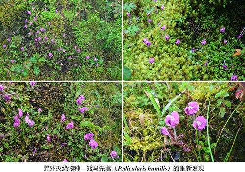 云南西部高黎贡山(南段)本土植物清查与保护工作顺利开展