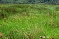 湖南植物园本土植物考察队发现野生稻分布