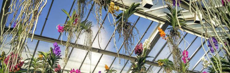 Orchids promo 750 x 450_1.jpg