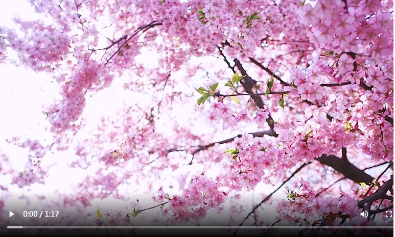 上海辰山植物园:听,花开的声音——浓妆淡抹总相宜