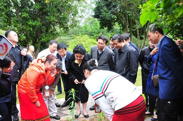 刘延东副总理在云南调研期间考察中科院西双版纳热带植物园