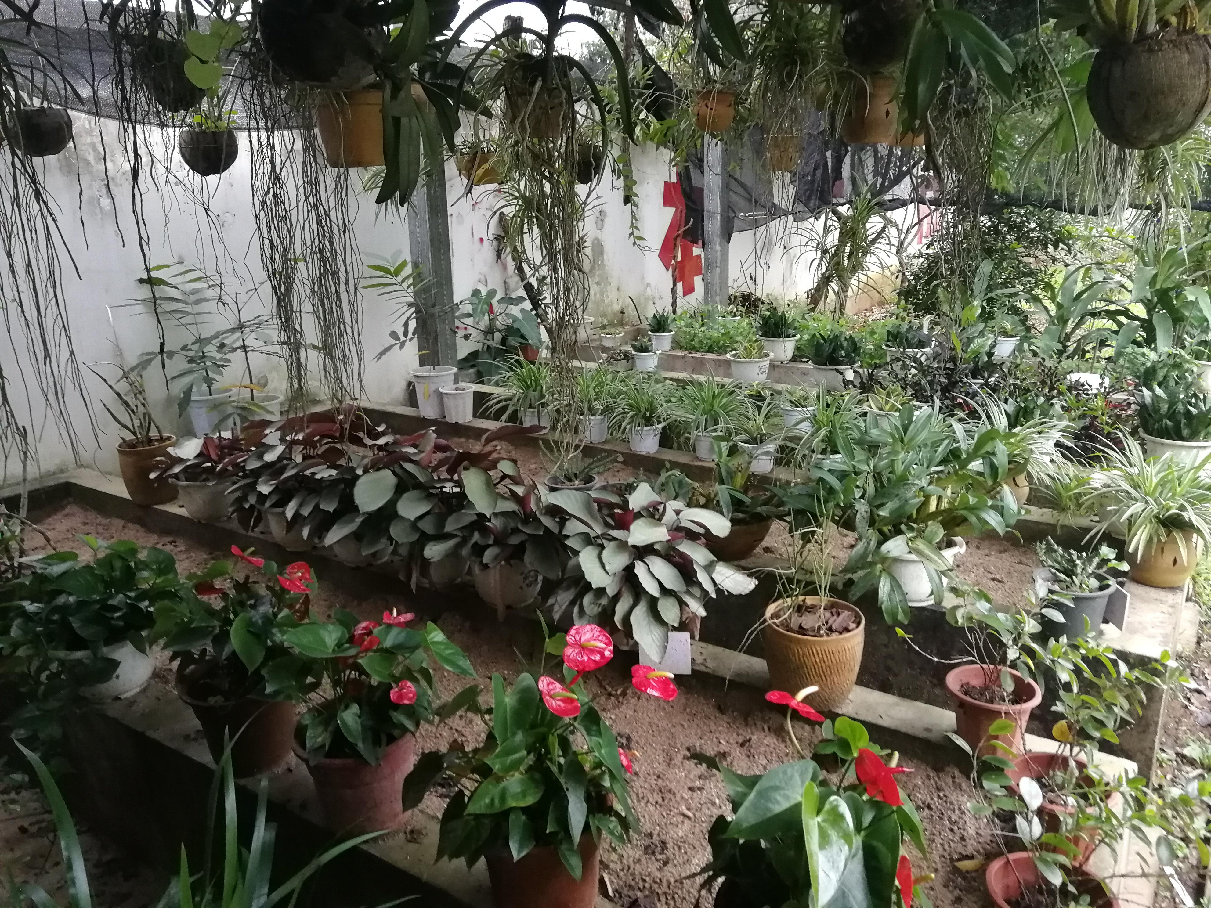 自然科普园中的苗圃.jpg