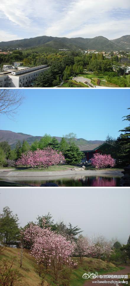 北京农学院2013_中科院植物研究所北京植物园-中国植物园联盟
