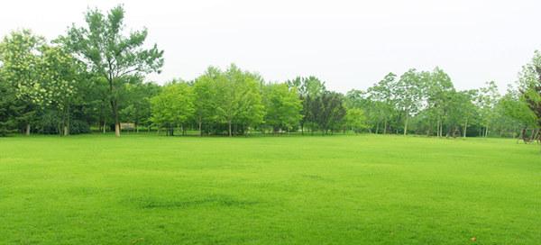 草坪3_副本.jpg
