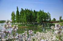 天福国家湿地公园桥苑专类植物园
