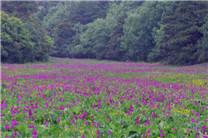 丽江高山植物园