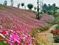 泸州市植物园