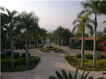 元谋干热河谷植物园