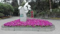 四川农业大学树木园