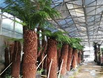 南通洲际珍奇树木园