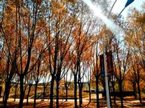 鄂尔多斯植物园