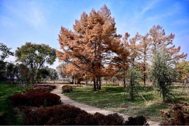 沈阳农业大学植物园