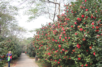 佛山植物园