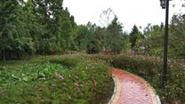 西藏农牧学院校园树木园