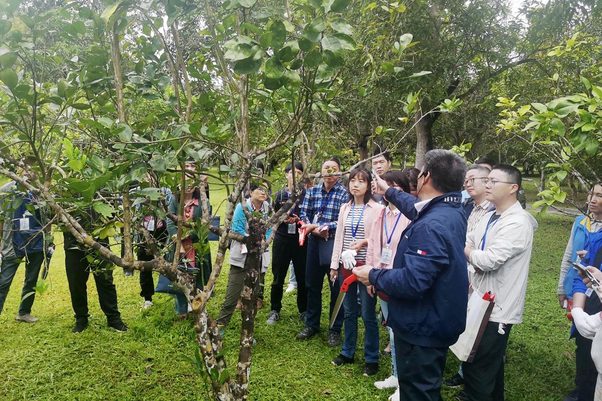 2020年大树名木养护管理培训班在版纳植物园顺利举办